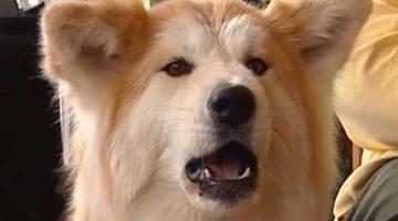 16_Keine-Angst-vor-dem-Hund
