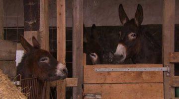 83_Smart-Donkeys